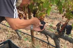 El_vino_spanische_Weine_Oensingen_Madre_Unica_1