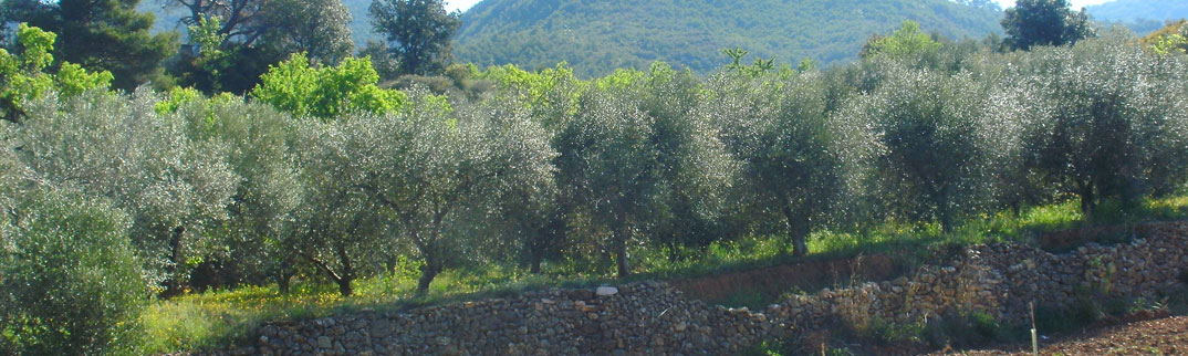 el-vino-oensingen-olivenoel