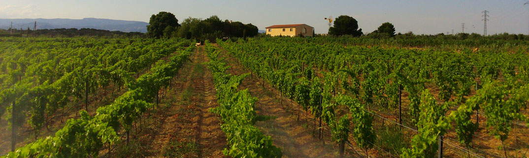el-vino-oensingen-vinyes-del-terrer_1